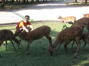 Japonsko - Nara zvirectvo