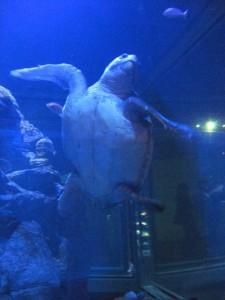 Japonsko - akvarium